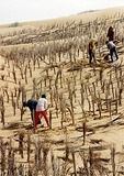 Reforestation in Shabotou, Ningxia
