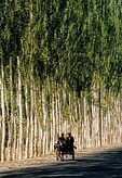 Uighur couple on donkey cart on tree-lined road in countryside near