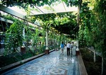 Turpan pedestrian corridor under trellis covered with grapevines