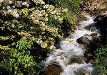 Mountain stream and spring flowers at Puerto Peulla in Lake District of Chile