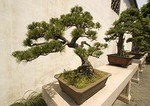 Suzhou's Master of the Nets Garden (Wang Shi Yuan) courtyard with bonzai trees
