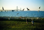 Children chasing seagulls at Straits of Mackinac with Mackinac Bridge in background