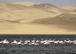 Greater flamingos wading in lagoon at Sandwich Harbour near Walvis Bay, Namibia