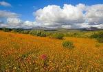 Namaqualand National Park spring wildflowers