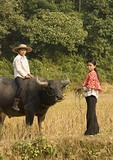 Farm girls with water buffalo in countryside near Lao Cai in northern Vietnam