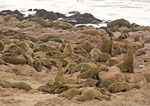 Cape fur seals on rocky Atlantic shore at Cape Cross in National West Coast Tourist Recreation Area of Namibia