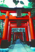 Torii gates at Kyoto's Fushimi-Inari Shinto Shrine
