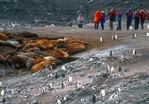 Tourists from cruise ship visiting southern elephant seals and Gentoo penguins on Livingston Island in South Shetlands