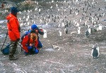 Tourists from cruise ship with Gentoo penguins at Livingston Island
