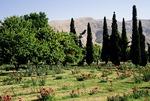 Bagh-e Eram palace gardens (Garden of Paradise) in Shiraz, Iran, city of rose gardens, nightingales, and poets