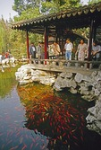 Yu Yuan (Garden of the Madarin Yu) goldfish pond in Shanghai