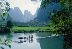Local farmers with livestock crossing dam on Jade River (Little Li river) near Gaotian in Yangshuo/Guilin area of Guangxi