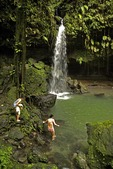 Island of Dominica's Emerald Pool fern grotto and water fall in Morne Trois Piton National Park