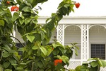 Basseterre balcony architecture and flora on Independence Square on Caribbean island of Saint Kitts