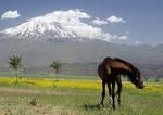Mt. Ararat, snow-capped dormant volcano and site of Noah Biblical story