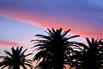 Makarska waterfront palms at sunset