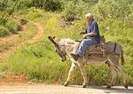 Hvar island resident riding donkey, traditional form of transportation