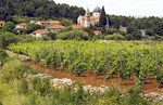 Hvar Island vineyard near village of Vrisnik