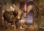 Wildlife on display at San Antonio's Buckhorn Saloon & Museum
