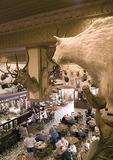 San Antonio's Buckhorn Saloon & Museum