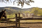 Texas Hill Country, Dixie Dude Ranch, riders returning to corral at days end