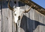 Texas Hill Country, Dixie Dude Ranch, longhorn cattle skull on barn