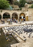 Sanliurfa (Urfa) Cave of Prophet Abraham (birthplace) entrance with pigeons and pilgrims filling courtyard