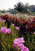 Singapore Botanical Gardens, National Orchid Garden