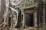 Angkor's Ta Prohm temple ruins with fig tree roots growing on wall