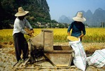 Farmers near Guilin threshing rice using foot power at harvest time