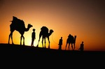 Rajasthan camel train (caravan) at sunset on the Sam Sand Dunes in the Thar Desert near Jaisalmer