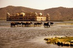 Jal Mahal with water buffalo in lake at Jaipur