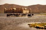 Jal Mahal with water buffalo in lake at Jaipur