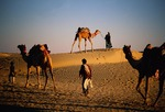 Rajasthani camel caravan at sunset on Sam Sand Dunes in Thar Desert near Jaisalmer