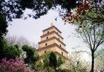 Xian's Dayan (Big Wild Goose) pagoda in springtime