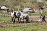 Maramures peasant father and son doing spring plowing with horse-drawn plow