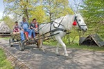 Romania's Museum of Traditional Folk Civilization traditional transport, at Sibiu in Transylvania