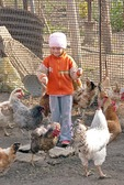 Romanian girl feeding chickens on farm in Danube Delta near Tulcea