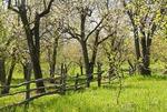 Romanian spring in countryside near Targoviste in Wallachia