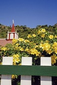 Saba: Flowering bush at Anglican Church in The Bottom