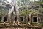 Cambodia's: Ta Prohm temple ruins with fig tree roots growing on wall
