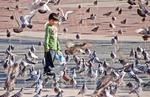 Barcelona boy feeding pigeons in Placa de Catalunya
