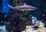 Barcelona Aquarium, Mediterranean-themed marine center in Port Vell, featuring sharks