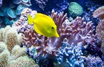 Yellow tang fish at Barcelona Aquarium, Mediterranean-themed marine center in Port Vell