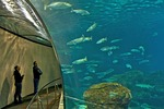 Barcelona Aquarium, Mediterranean-themed marine center with underwater tunnel