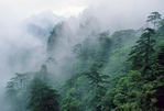 Huangshan mists swirl around the mountain's pines and peaks in the North Sea (Bei Hai) area