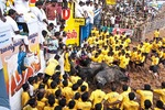 A trio of confused bulls huddle around the starting chute, as the precariously seated crowd and yellow-shirted tamers look on, at the Jallikattu bull taming event during the Pongal Festival event in village of Alanganallur in Tamil Nadu, India.