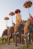 Gold-caparisoned elephants are featured at the Thrissur Pooram, a Hindu temple-centered festival of Kerala.