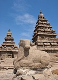 Sculpture of cow at 8th century Mahabalipuram Shore Temple of Pallava rulers in Dravidian architectural style along Bay of Bengal in Tamil Nadu
