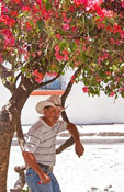Honduran cowboy in shade of flowering royal poinciana or flamboyant tree in Parque Central of town of Copan, Honduras